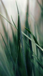 Grass World Garden Leaf Nature