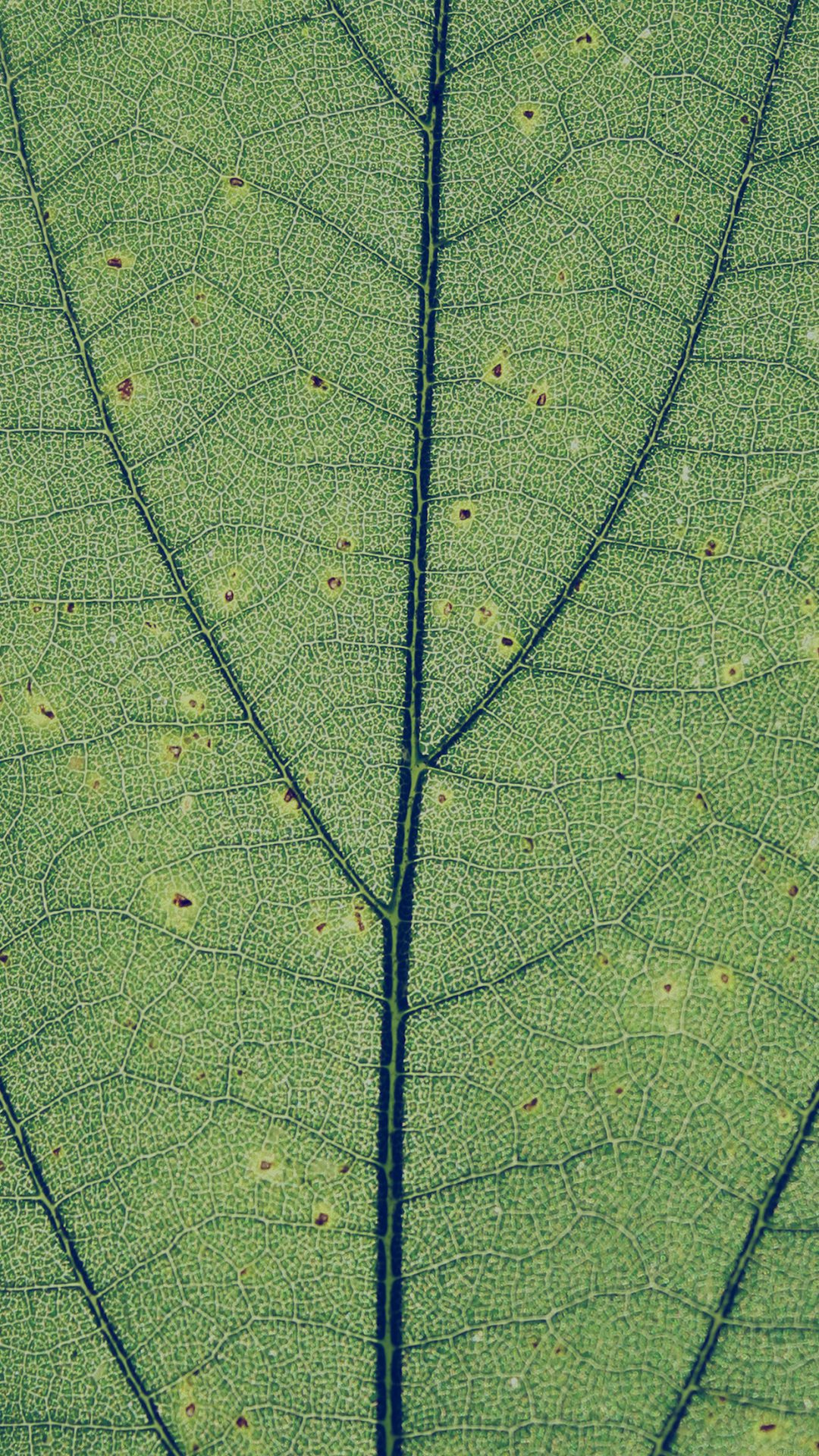 Green Leaf Texture Nature Pattern