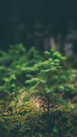 Green Moss Flower Nature