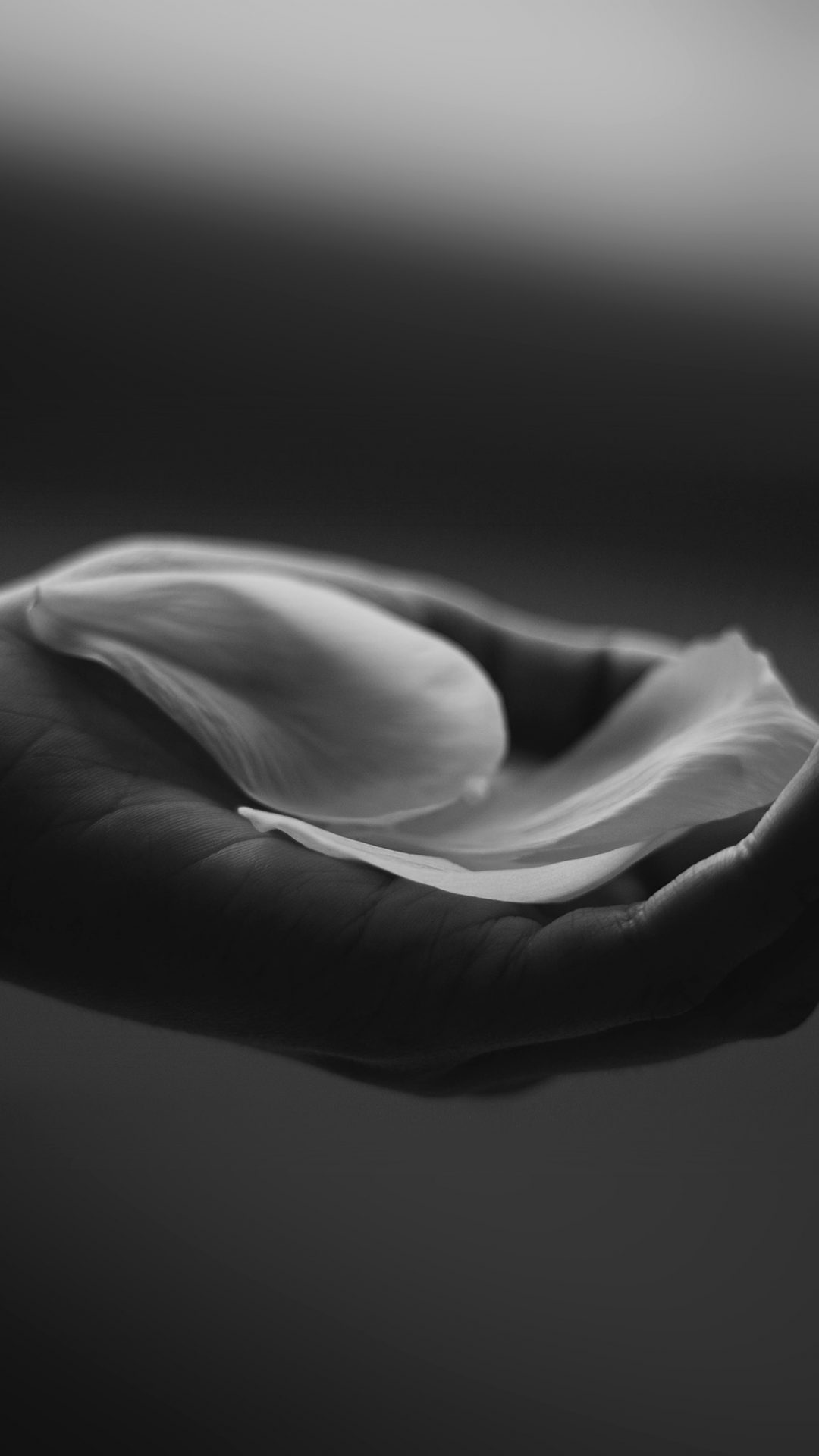 Hand Flower Dark Bw Human Nature