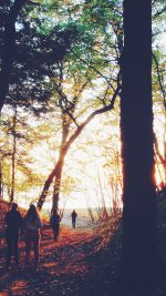 Hiking Mountain Wood Sunset Nature