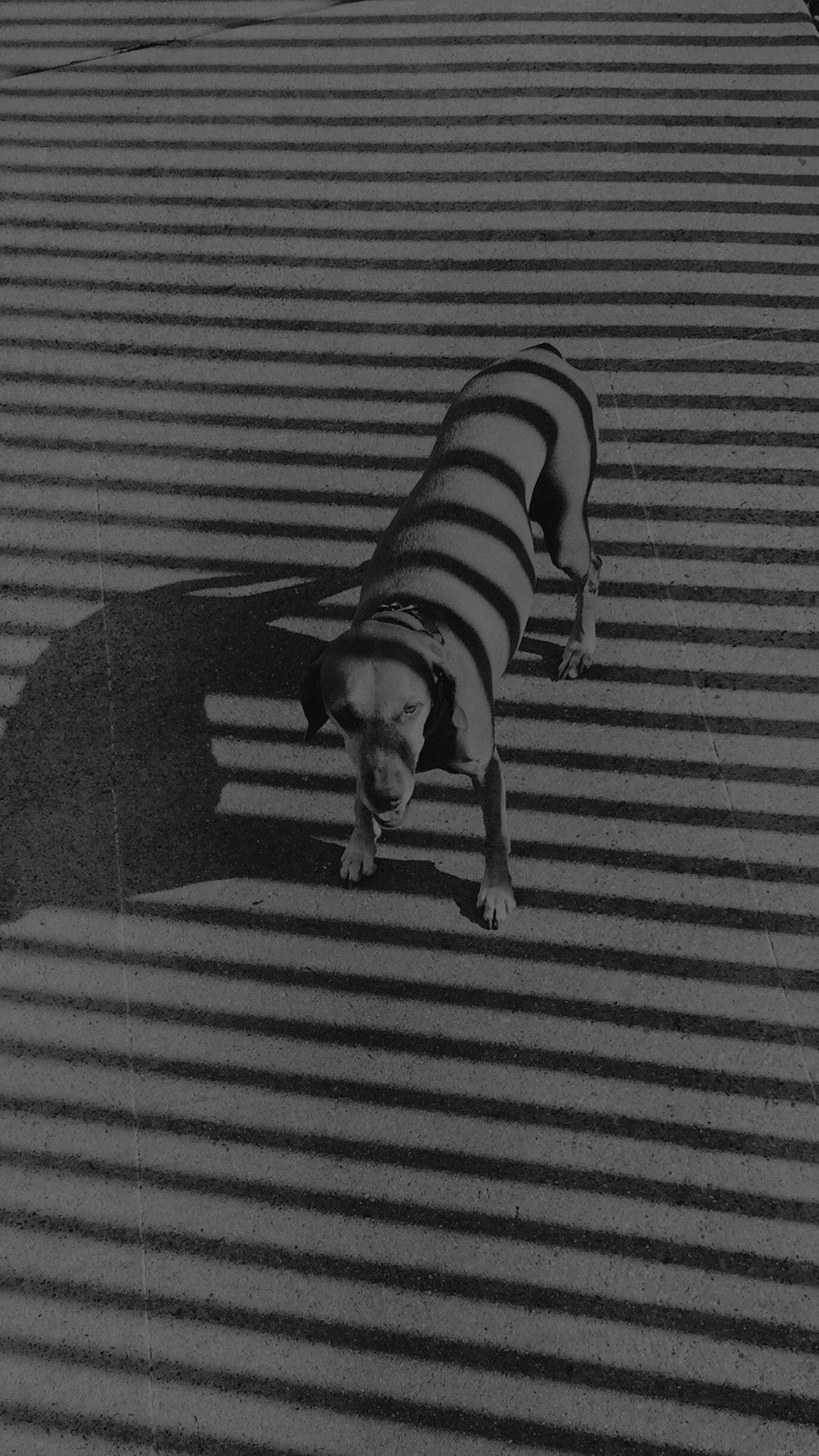 Hot Dog Bw Dark Black Photography Art Nature