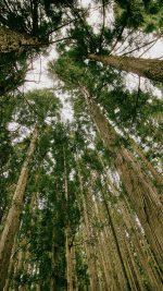 In Forest Tall Tree Kim Daniel Nature