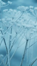 Ipad Snow Winter Flower Blue Nature Bokeh