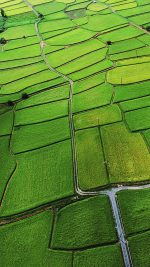 Japan Rice Paddy Field Nature