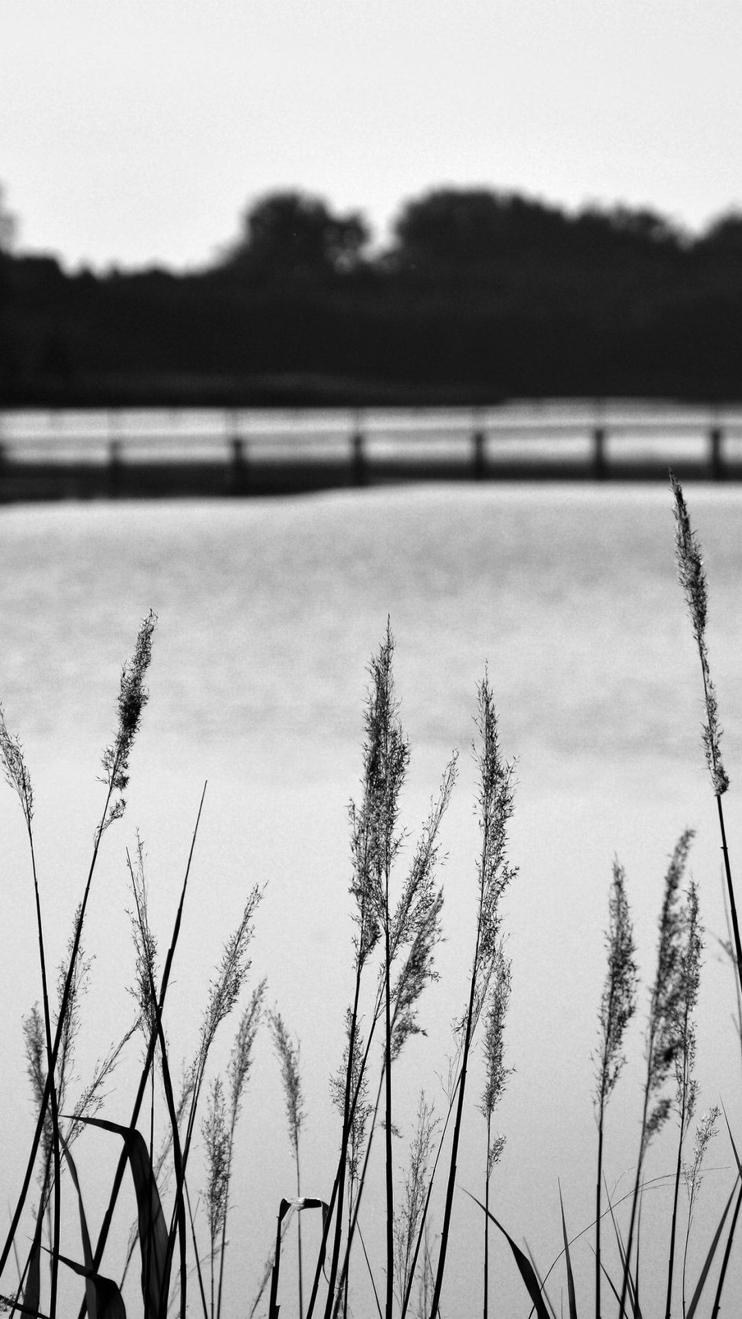 Lake View Flower Water Calm Nature Bokeh Dark Bw