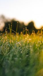 Lawn Green Nature Sunset Light Bokeh Sprin