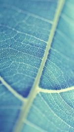 Leaf Bokeh Blue Nature
