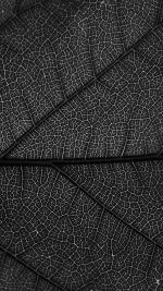 Leaf Dark Bw Nature Texture Pattern