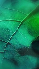 Leaf Flare Nature Green Wood Love Pattern