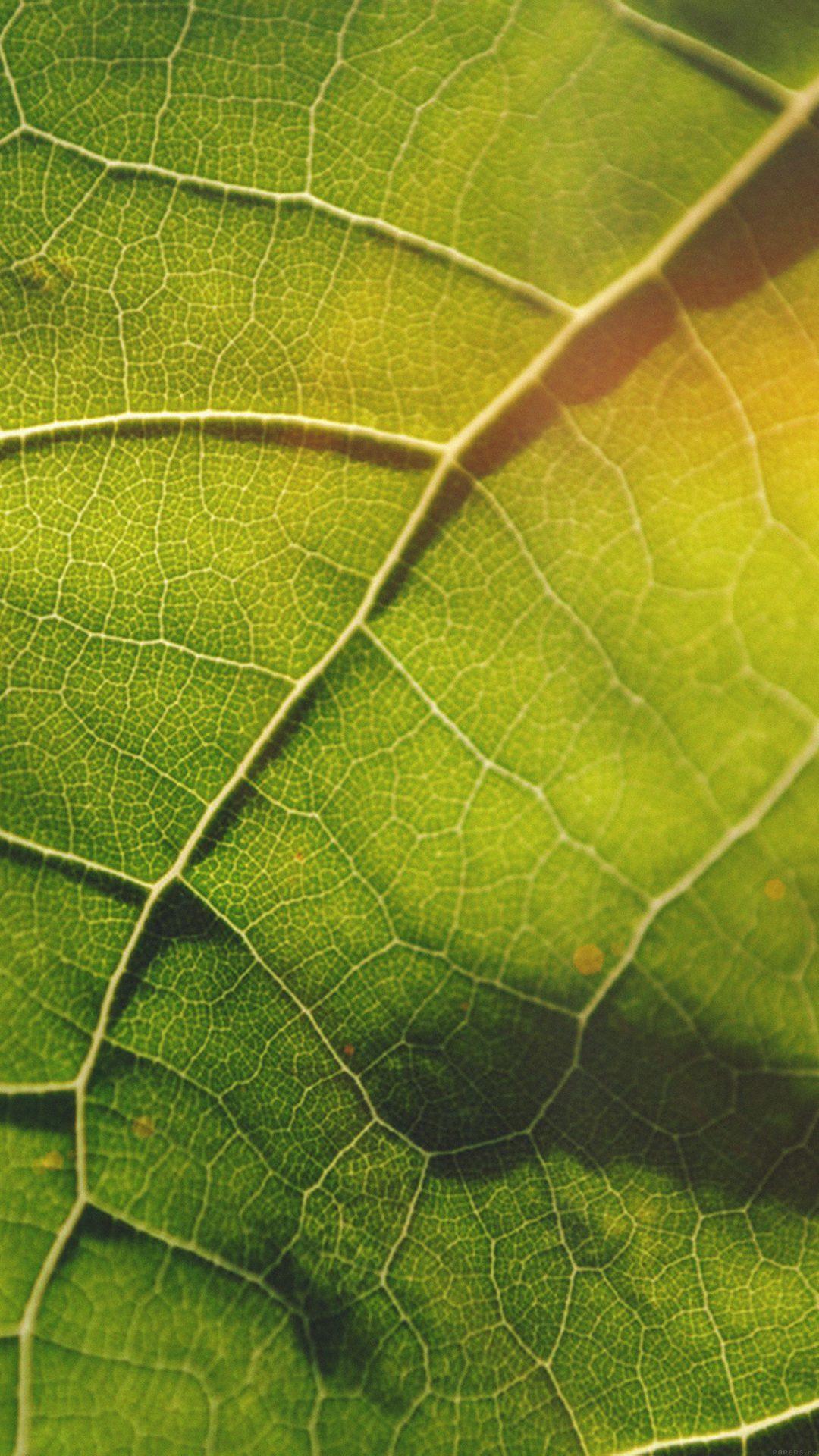 Leaf Flare Nature Wood Love Pattern