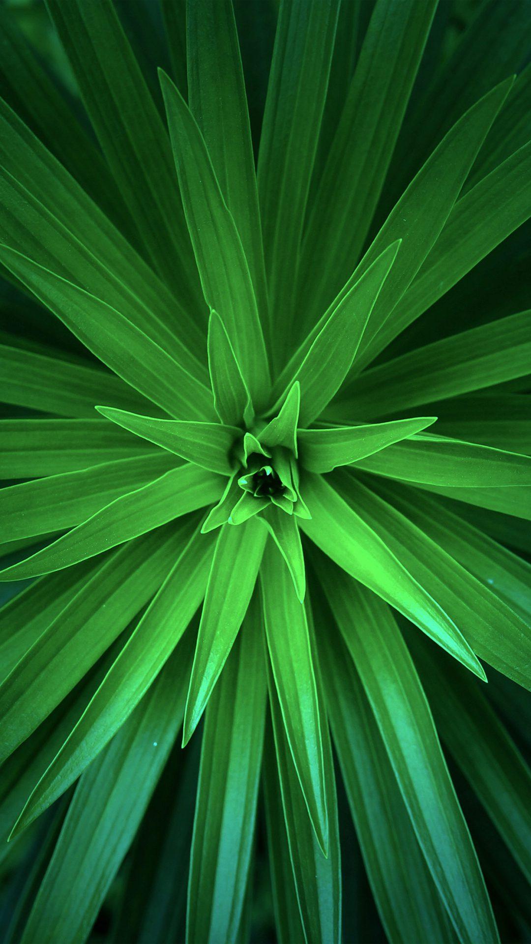 Leaf Flower Green Line Nature