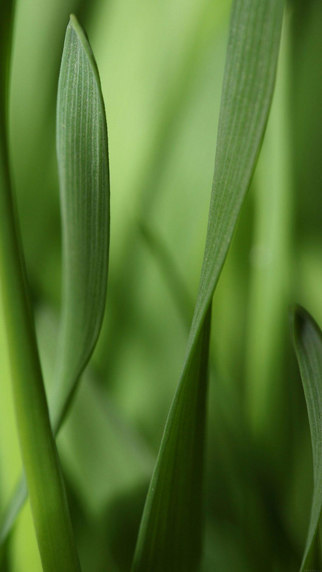 Leaf Grass Bokeh Nature
