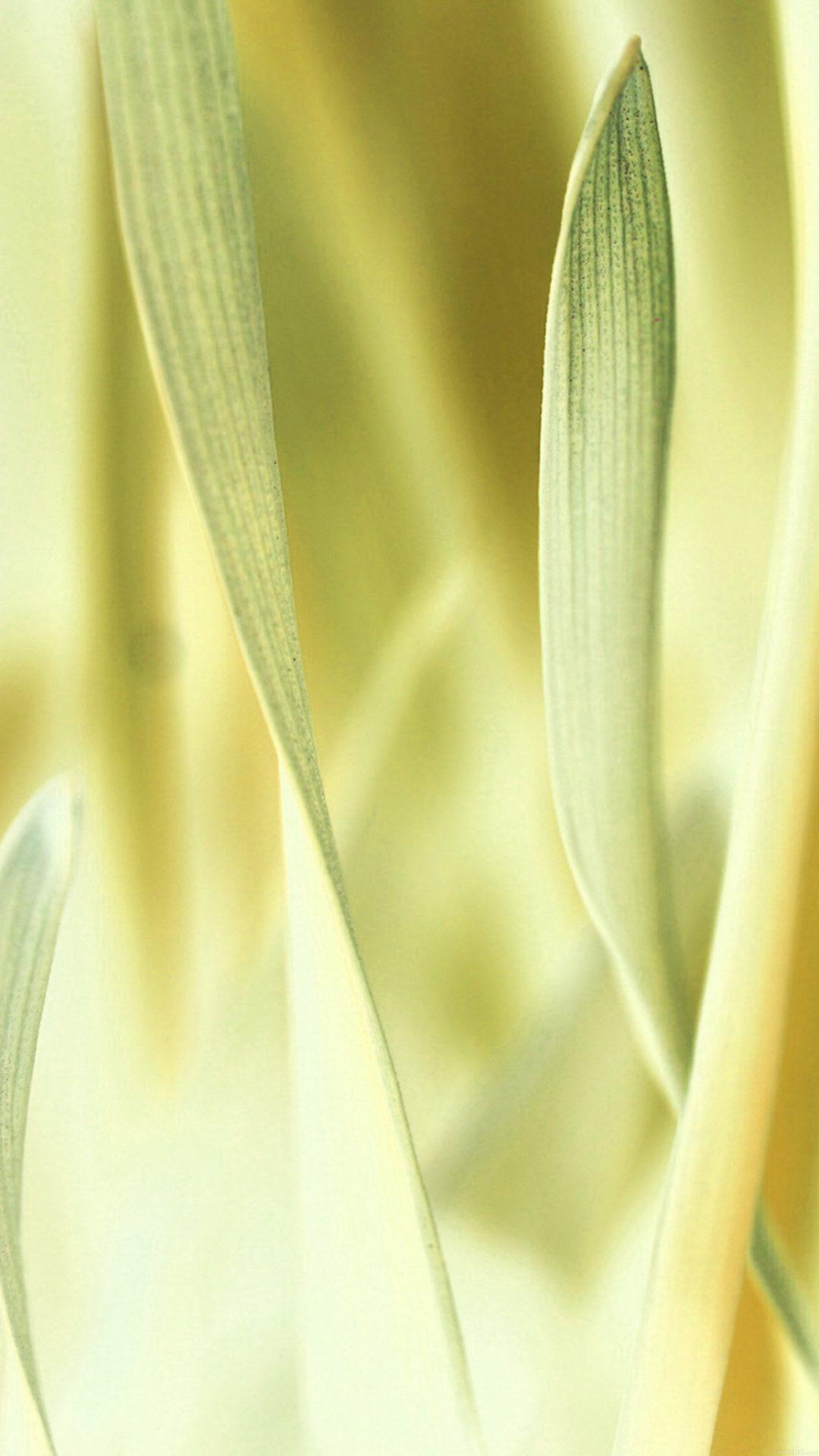 Leaf Grass White Bokeh Nature