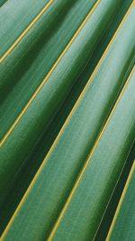Leaf Green Line Nature Pattern
