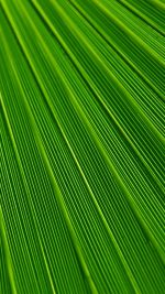 Leaf Green Surface Texture Nature Pattern