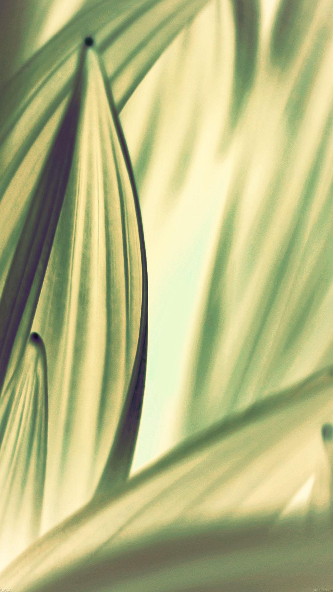 Leaf Nature Light