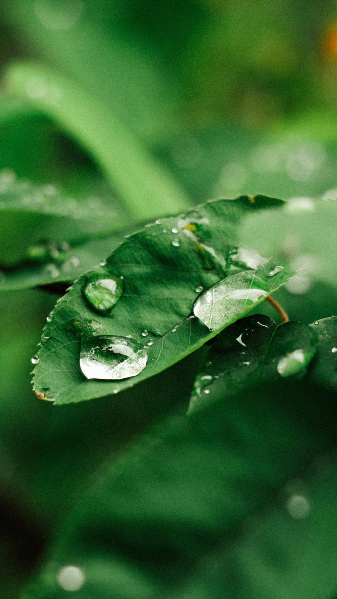 Leaf Rain Green Nature Forest