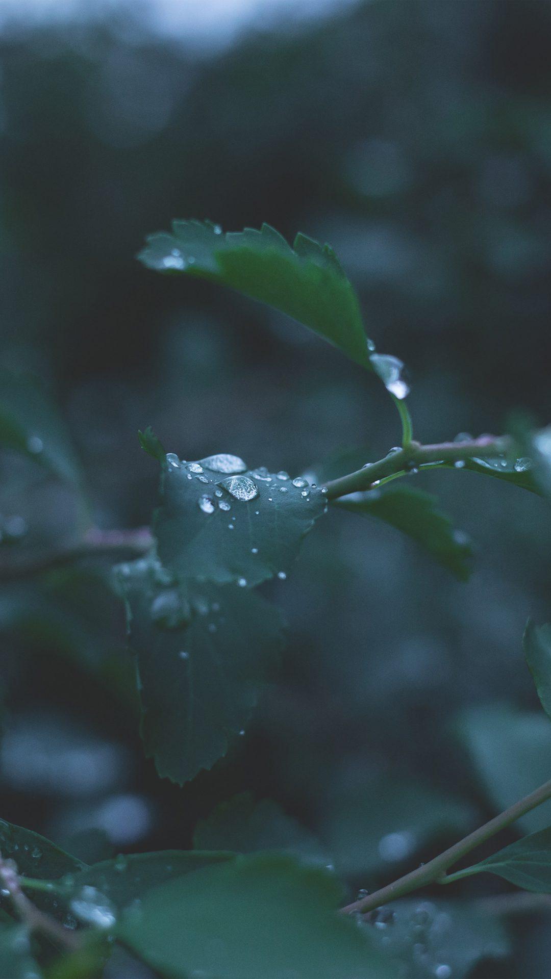 Leaf Water Rain Nature Green