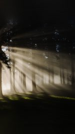Light In Wood Forest Nature Shine