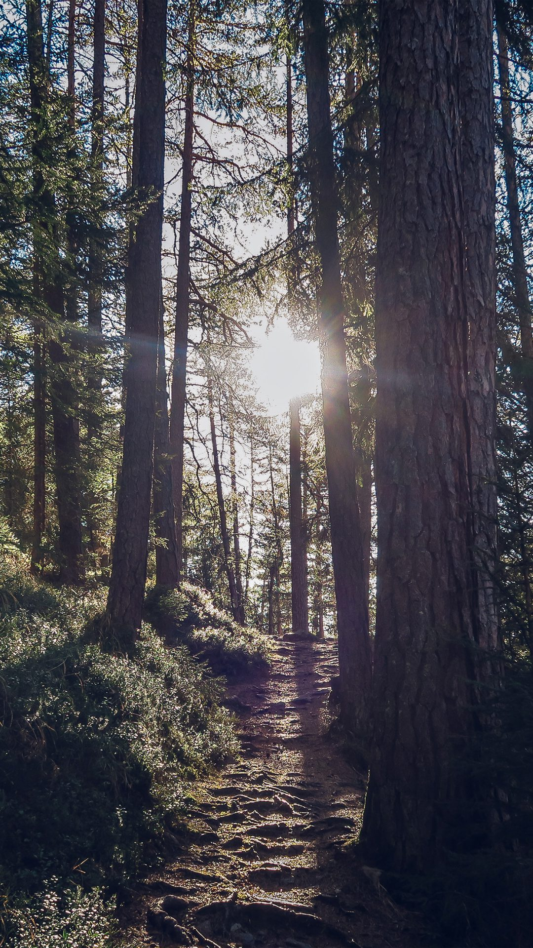 Light Wood Sun Forest Mountain Nature