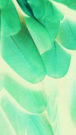 Meizu Feathre Green Blue Nature Texture Animal Pattern
