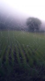 Morning Dew Spider Web Rain Water Nature