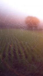 Morning Dew Spider Web Rain Water Nature Flare