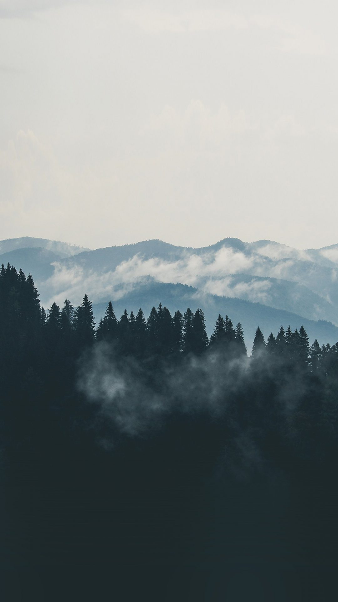 Mountain Fog Nature View Wood Forest