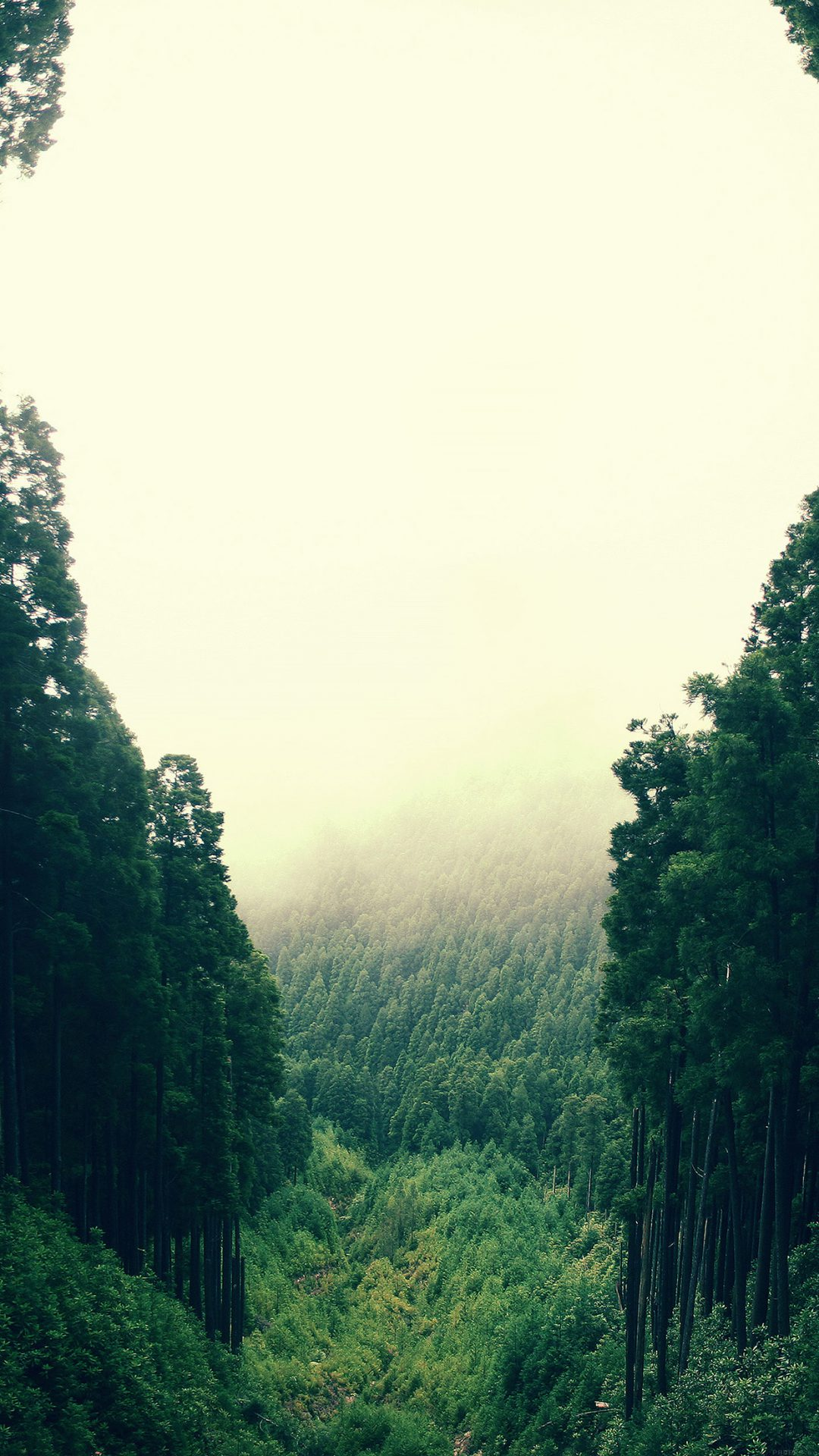 Mountain Mirror Green Wood Nature