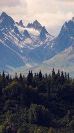 Mountain Nature Woodd Summer Green