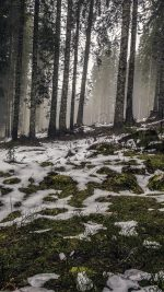 Mountain Snow Woods Nature
