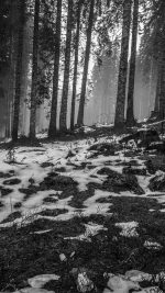 Mountain Snow Woods Nature Dark Bw
