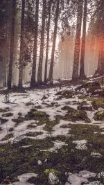 Mountain Snow Woods Nature Flare