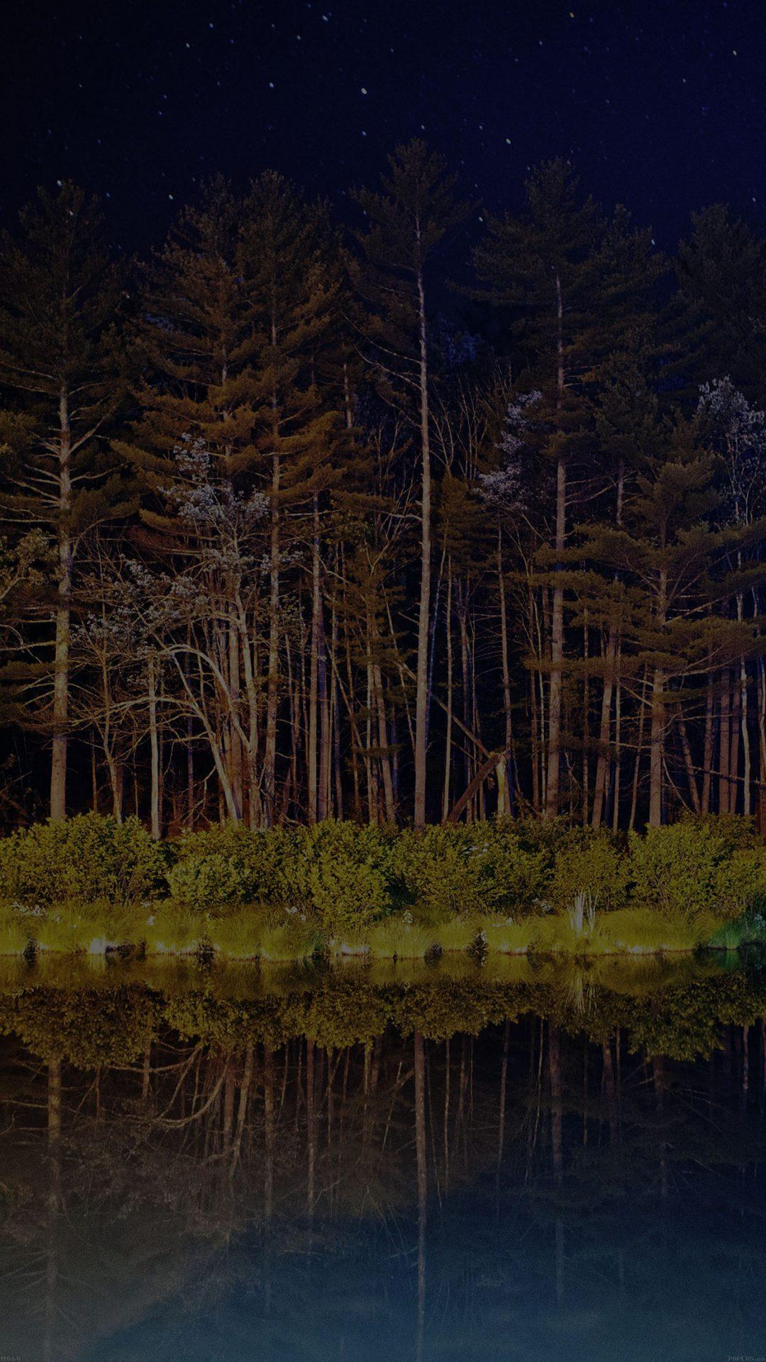 Night Dark Wood With Lake Nature