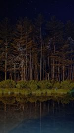 Night Dark Wood With Lake Nature