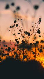Night Nature Flower Sunset Dark Shadow