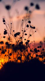 Night Nature Flower Sunset Dark Shadow Red