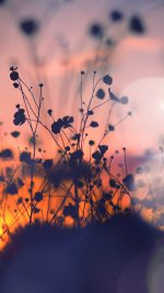 Night Nature Flower Sunset Dark Shadow Red Flare
