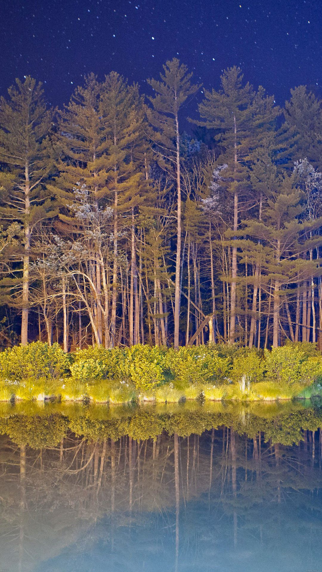 Night Wood With Lake Nature