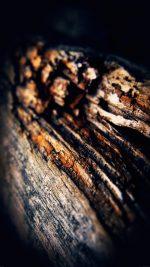 Old Aged Tree Vertical Dark Nature