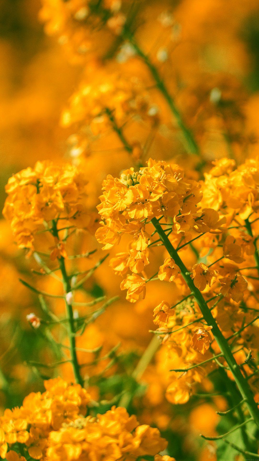Orange Flower Spring Fun Nature
