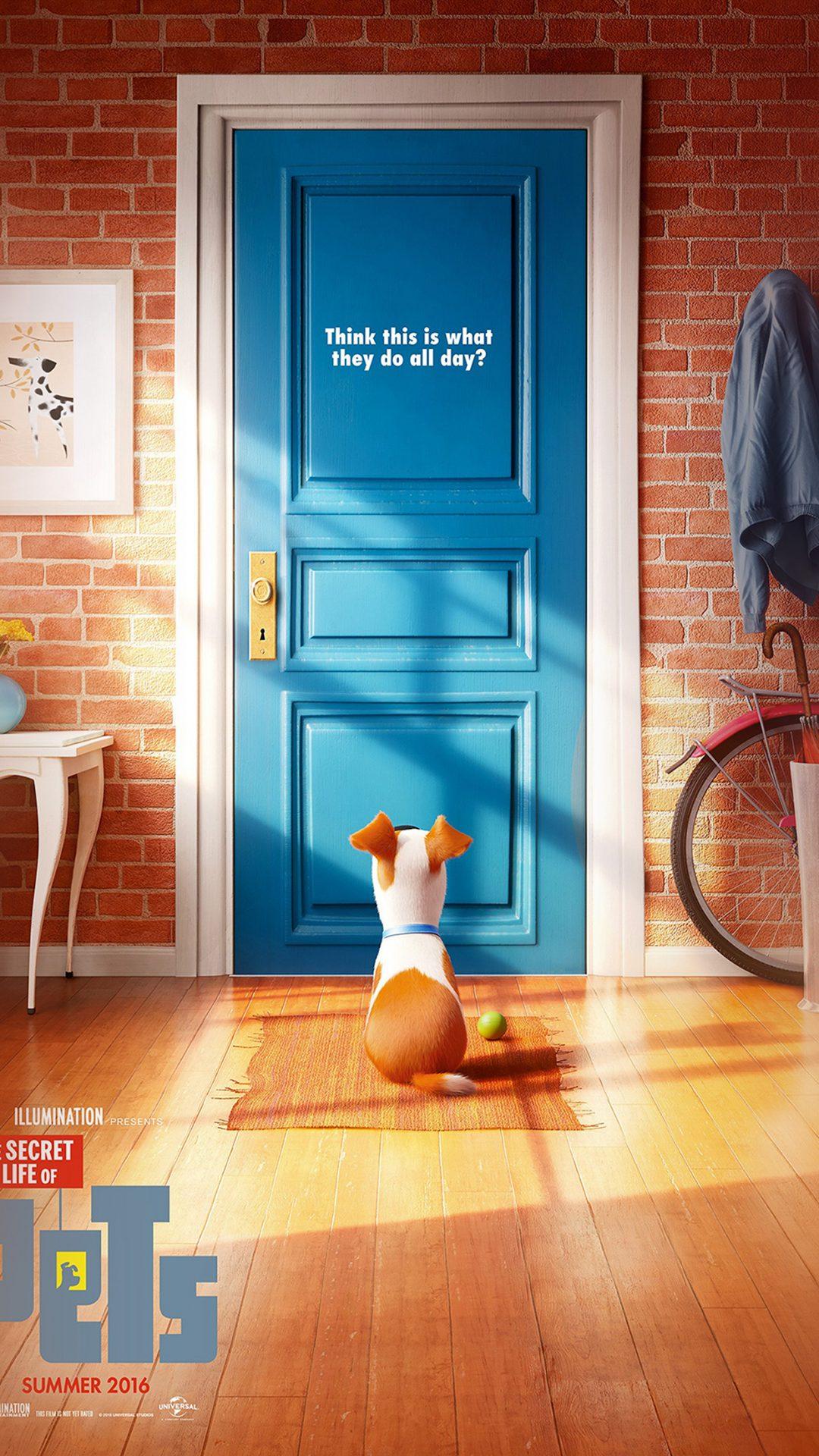 Pets Animation Cute Film Art Illustration