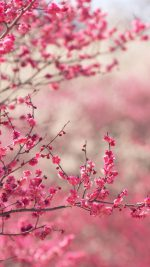Pink Blossom Nature Flower Sprin