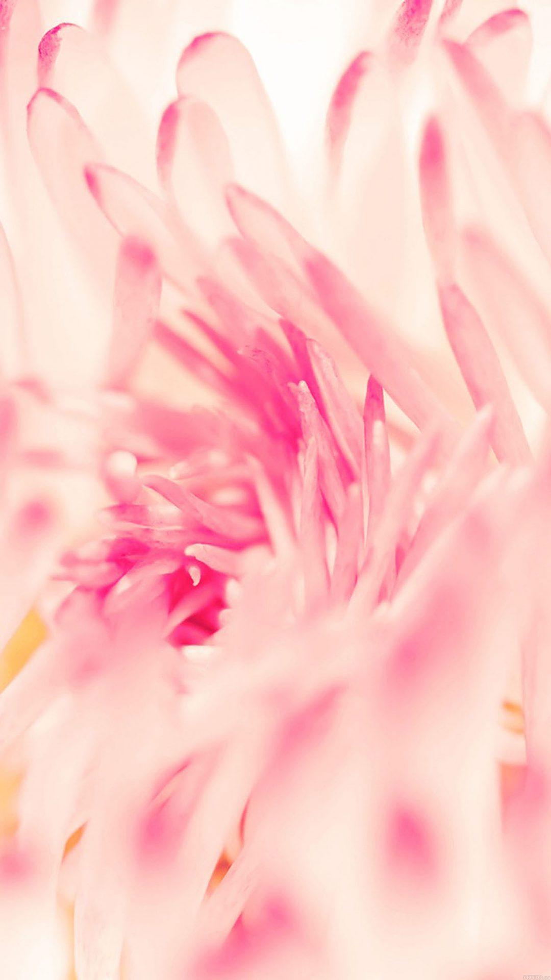 Pinkyflower Nature
