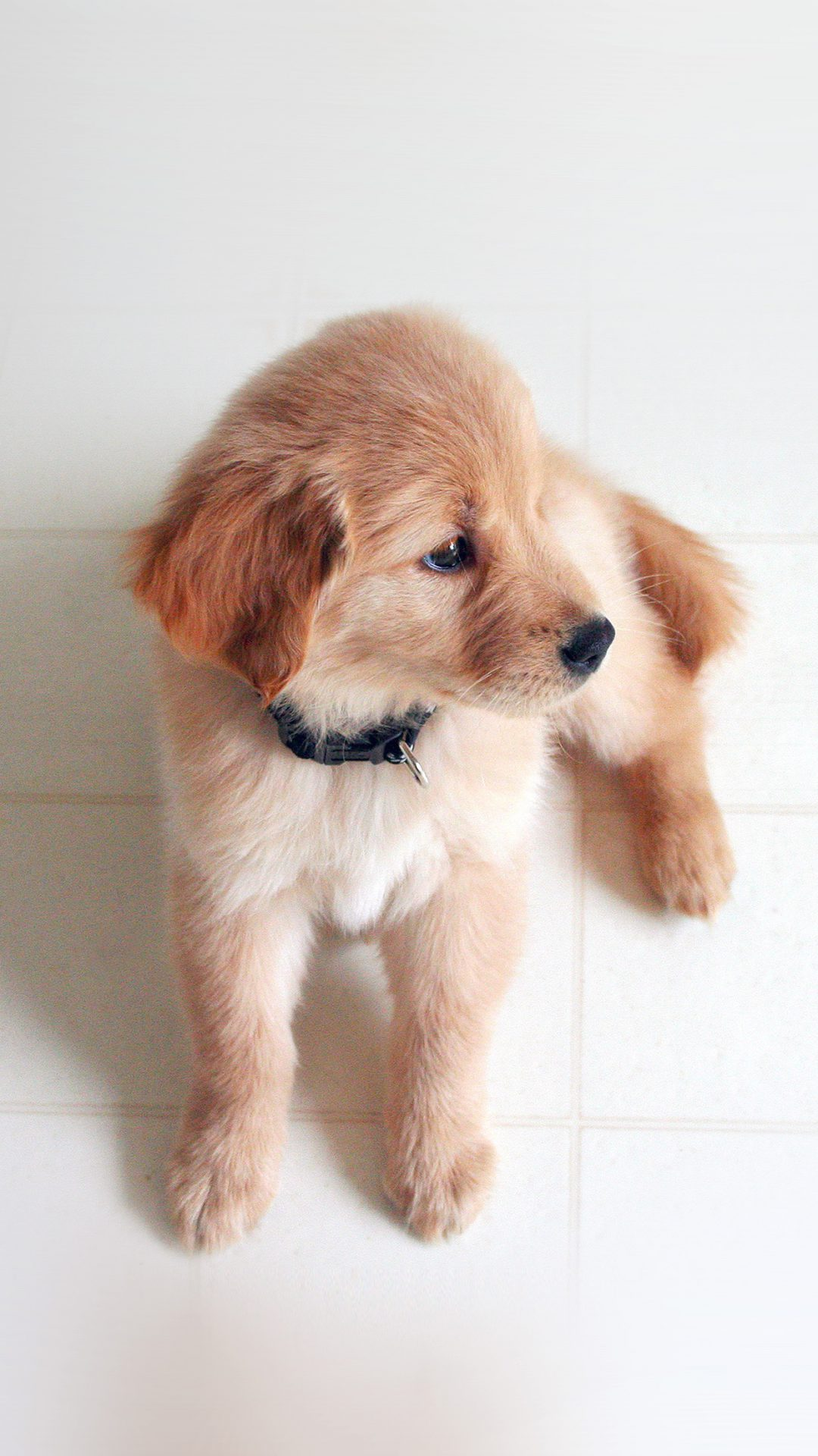 Puppy Love Cute Animal Nature Sitting Do