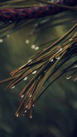Rain Pine Tree Dark Green Nature Mountain