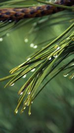 Rain Pine Tree Green Nature Mountain