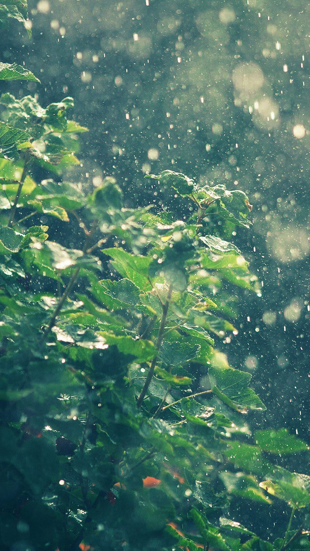 Raining Summer Sunny Flower Nature
