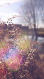 Sad Day Flower Nature Flare